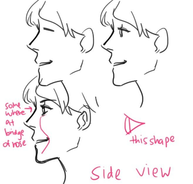 This is a photo of Gutsy Side View Drawing Reference