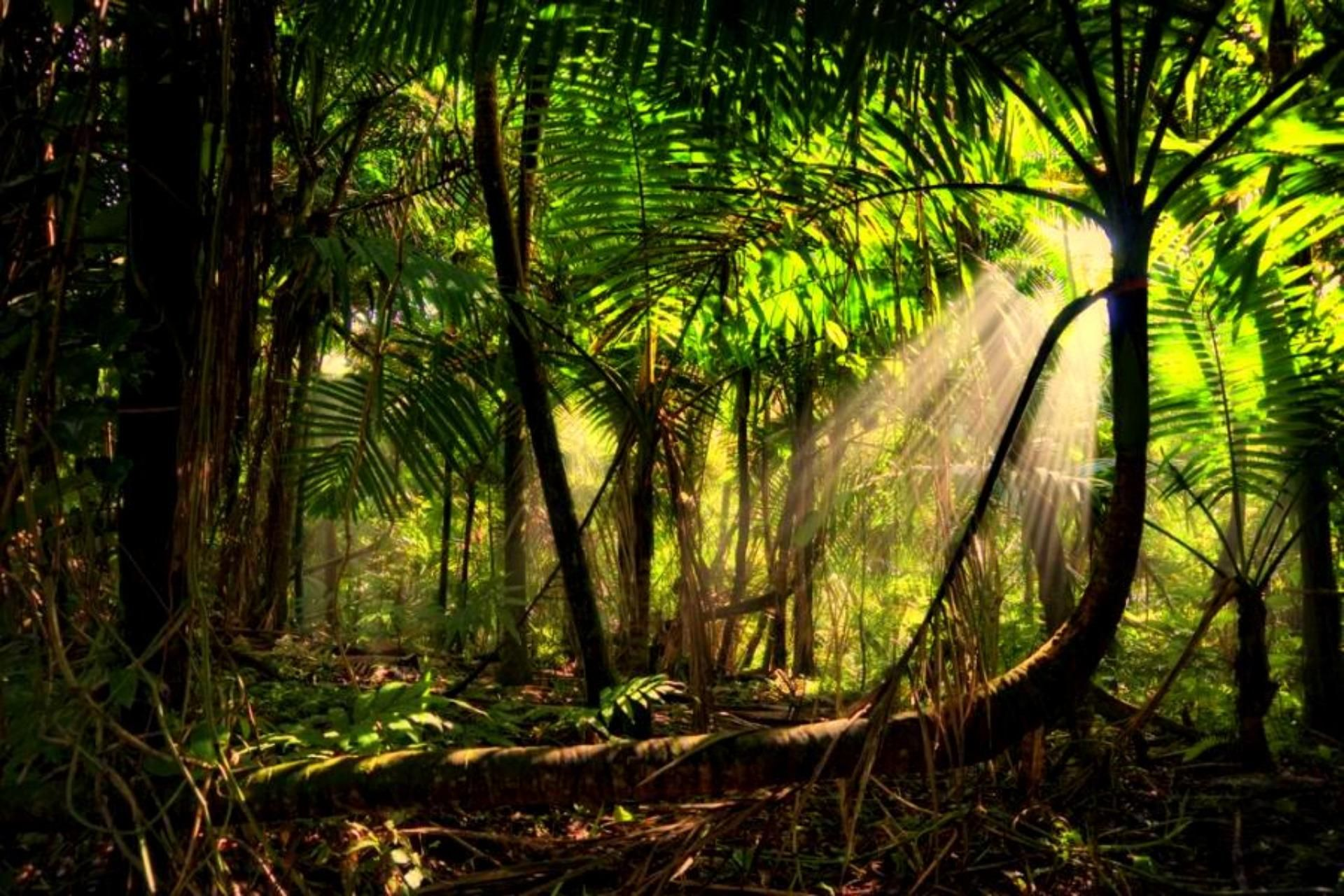 Amazon Forest Images Hd