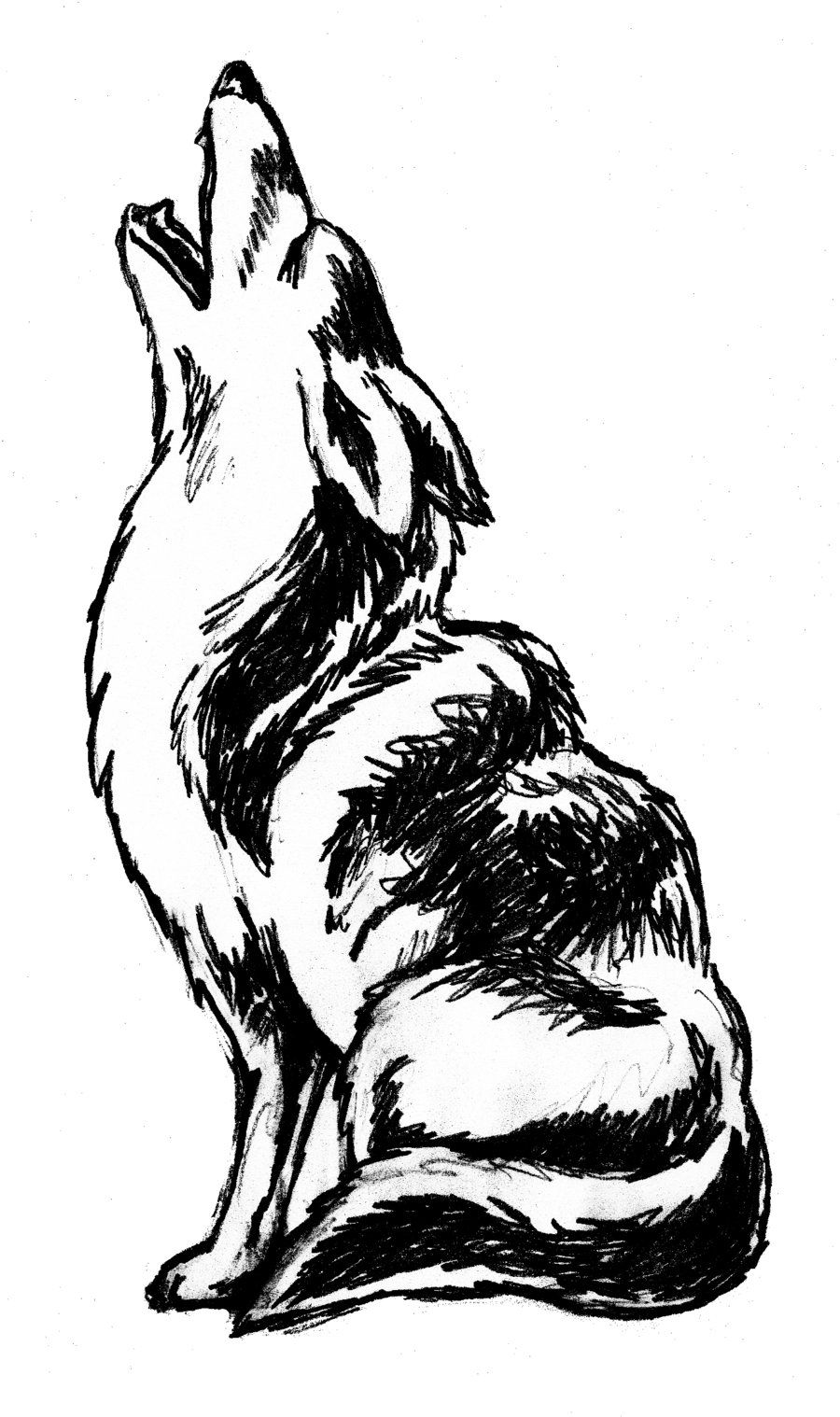 Coyote Howling Clip Art | howling Coyote by ...