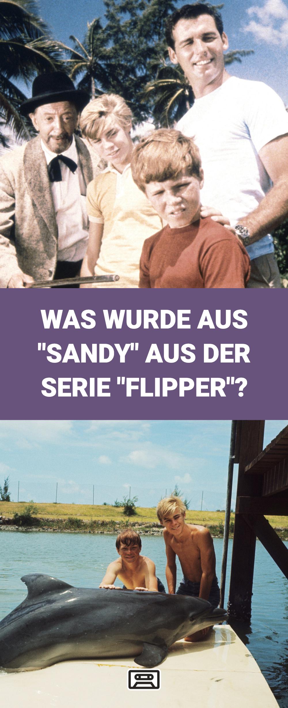 Der Mutige Delphin Flipper War Eine Unserer Lieblingskinderserien Aber Was Wurde Aus Seinem Menschlichen Freund Sandy Inzwi Filme Komodien Animationsfilme