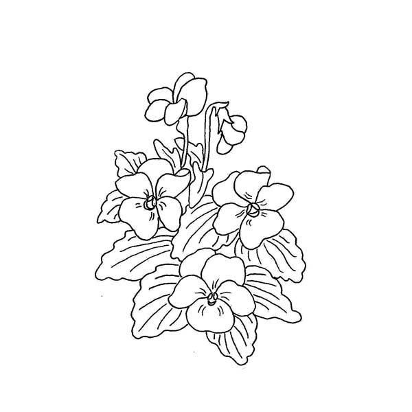 Wild Violet Flower Drawings | Wild Violet | Tatoos ...