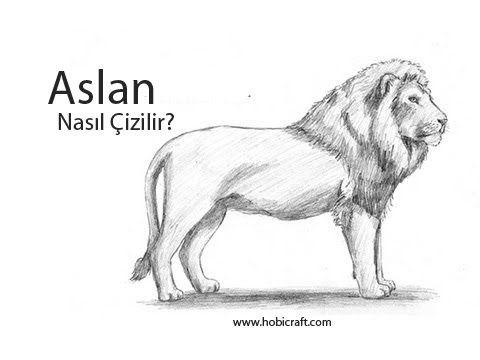 Karakalem Aslan Resmi Nasil Cizilir Aslan Hayvan Desenler