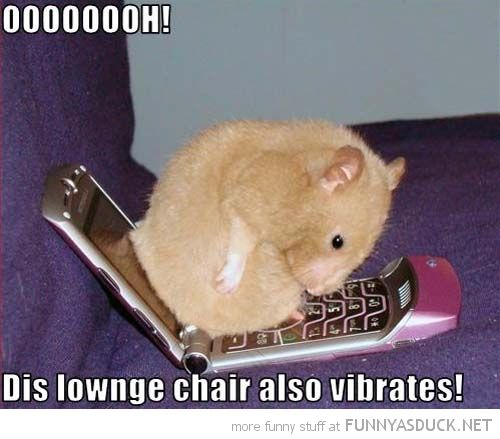 Http Www Google Com Blank Html Cute Hamsters Funny Hamsters Cute Animals With Funny Captions