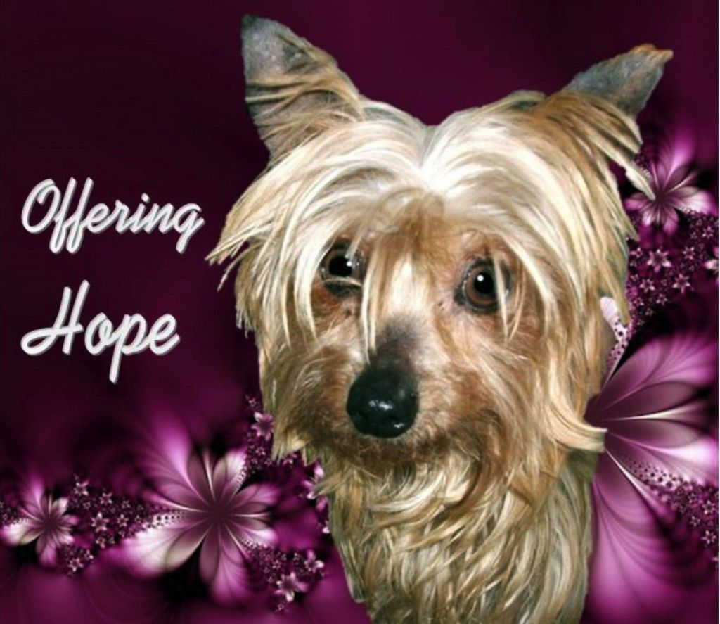 Bbs Rescue Spotlight Safehaven Small Breed Rescue With Images Dog Blog Small Breed Breeds