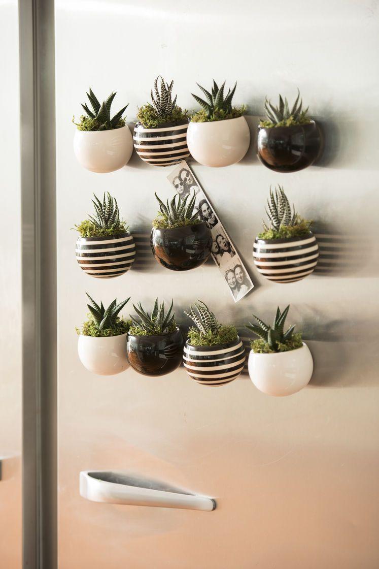 Indoor Succulent Garden: Mini Magnet Succulent Garden, Set Of 3
