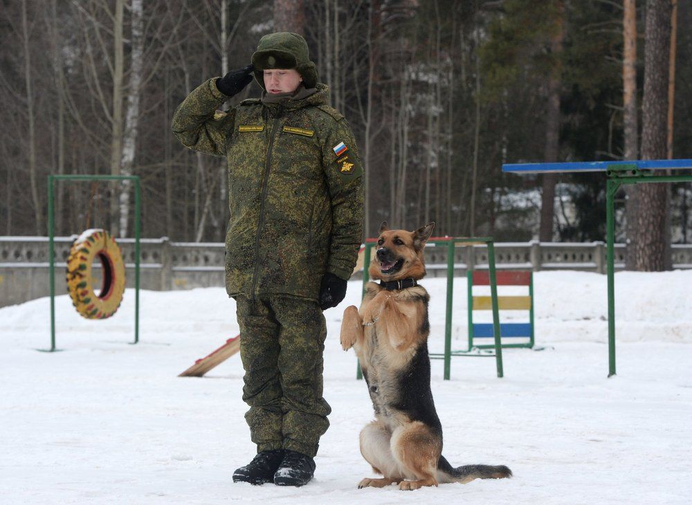 Unique Look At The Dog Training Center Of Russian Military Dog