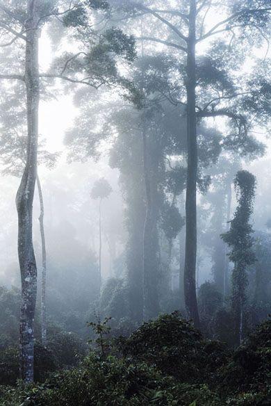 Axel Hütte, Danum Valley, Borneo, 2008