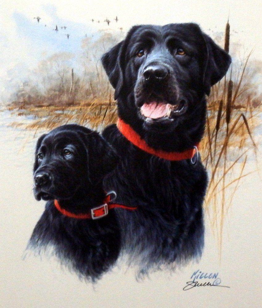 Jim Killen The Legacy Black Labs Labrador Retriever Labrador Retriever Dog Black Labrador Retriever