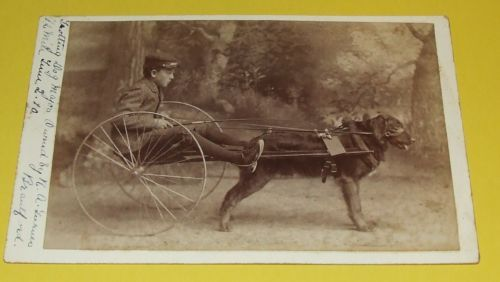 Cabinet Dealer Or Reseller Collectible Vintage U0026 Antique Photos (Pre 1940)  | EBay