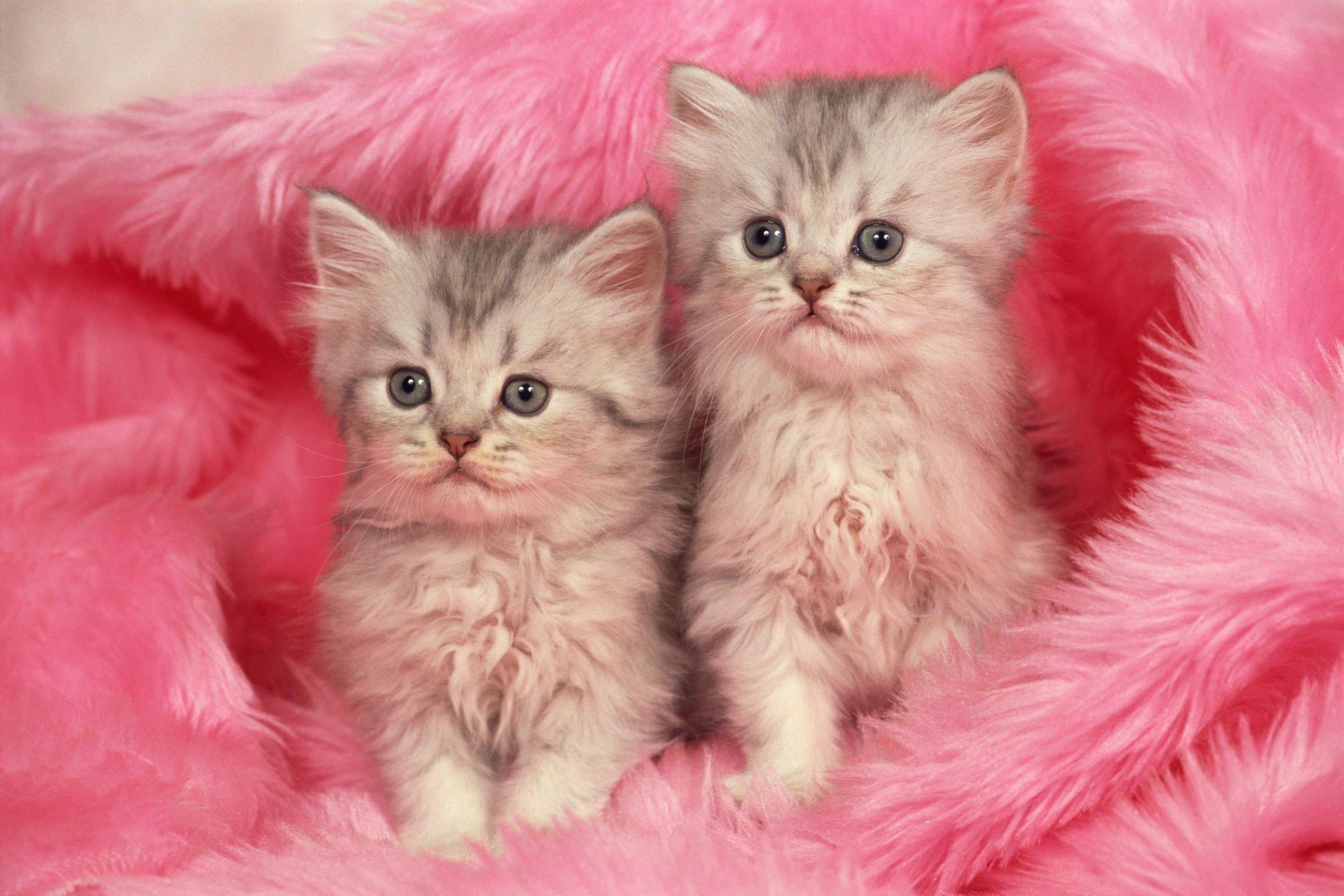 Free Cute Kitten Wallpapers In 2021 Kittens Cutest Kitten Wallpaper Cats And Kittens