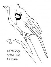 Coloring Pages Cardinal Bird Coloring Pages For Kids Bird