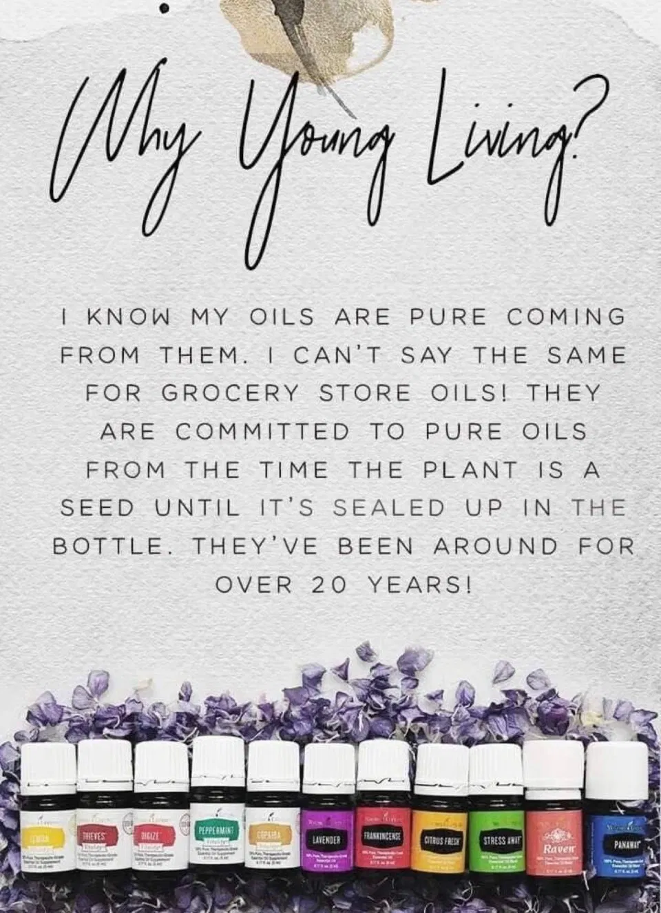 Essential Oils Companies that let you visit their farms