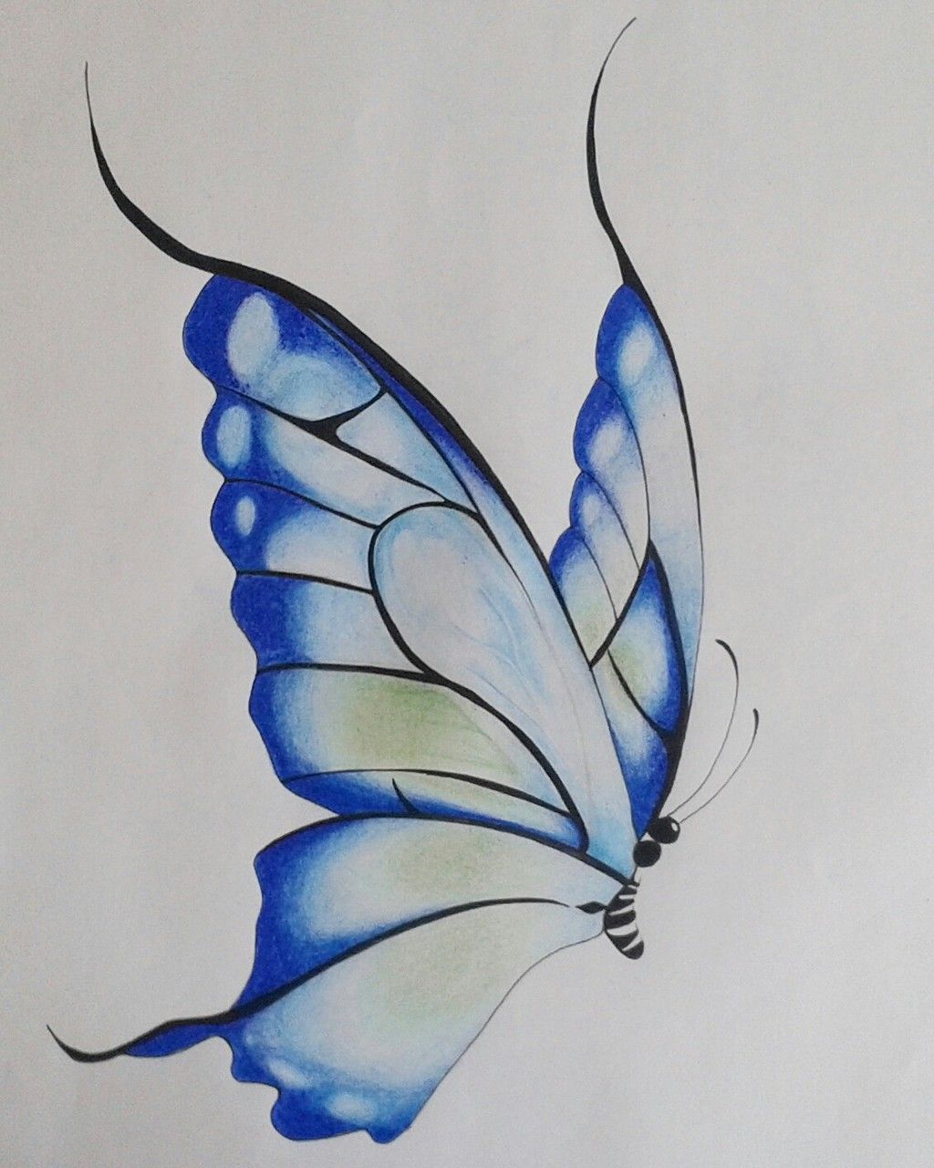 Image Result For Butterfly Drawings With Color Blue Butterfly Art Drawing Butterfly Drawing Butterfly Sketch