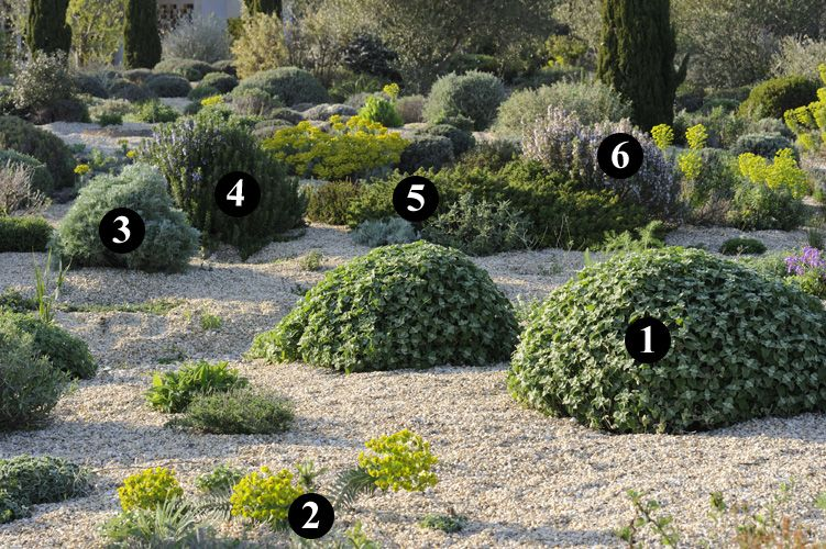 1 ballota hirsuta 2 euphorbia rigida 3 artemisia for Pflanzengestaltung garten