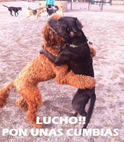 Comenzo El Baile Luchooo Pone Musicaaa Perro Bailando Perros Animales Graciosos