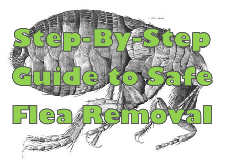 Safe and Effective Flea Removal!