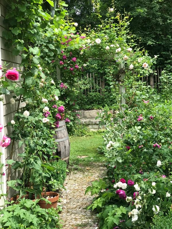Sarah S Cottagegarten Villa Konig Garten Garten Bepflanzen Cottage Garten