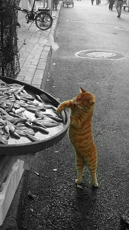 lemme get some of this here fish. . .yes, quickly now