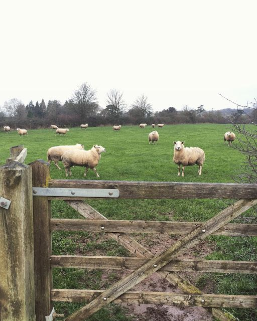 Travel - Our week in The Cotswolds {Part 1} - Roses and Rolltops