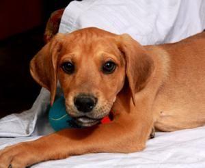 Adopt Mason on | Redbo...
