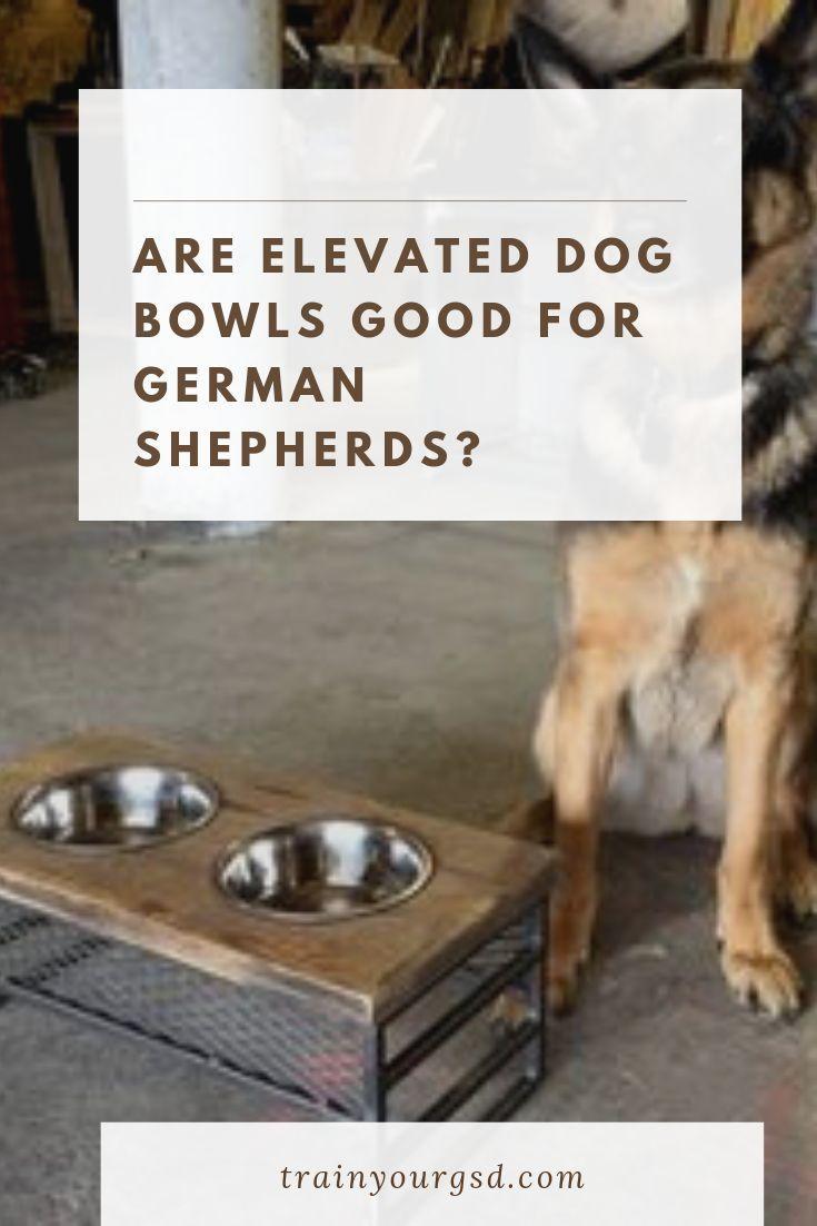 raised dog food bowl for german shepherd