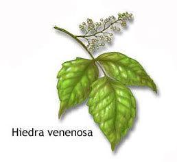 Plantas venenosas  plantas venenosas  Pinterest  Plantas