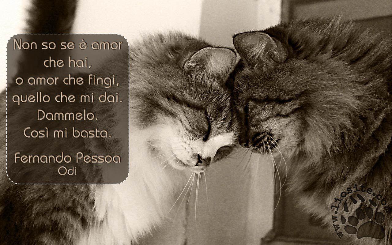 Fernando Pessoa - Non so se è amor