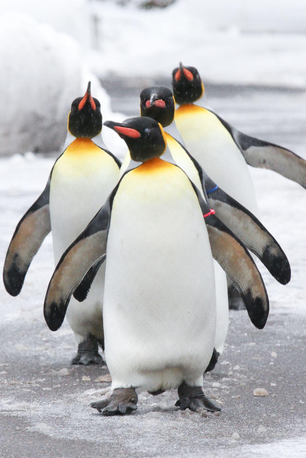 инновационное фото пингвинов с цветочками первой встрече