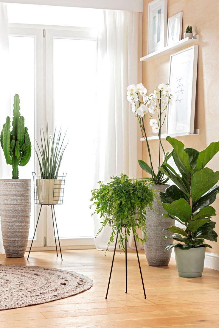 Pflanzen für bodentiefe Fenster - Wohnung ideen  Wohnzimmer