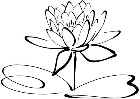Coloriage Fleur De Nenuphar.Coloriage Feuilles Et Fleurs De Nenuphar Categories