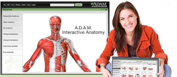 Adam Interactive Anatomy Online Aia Online Online Anatomy