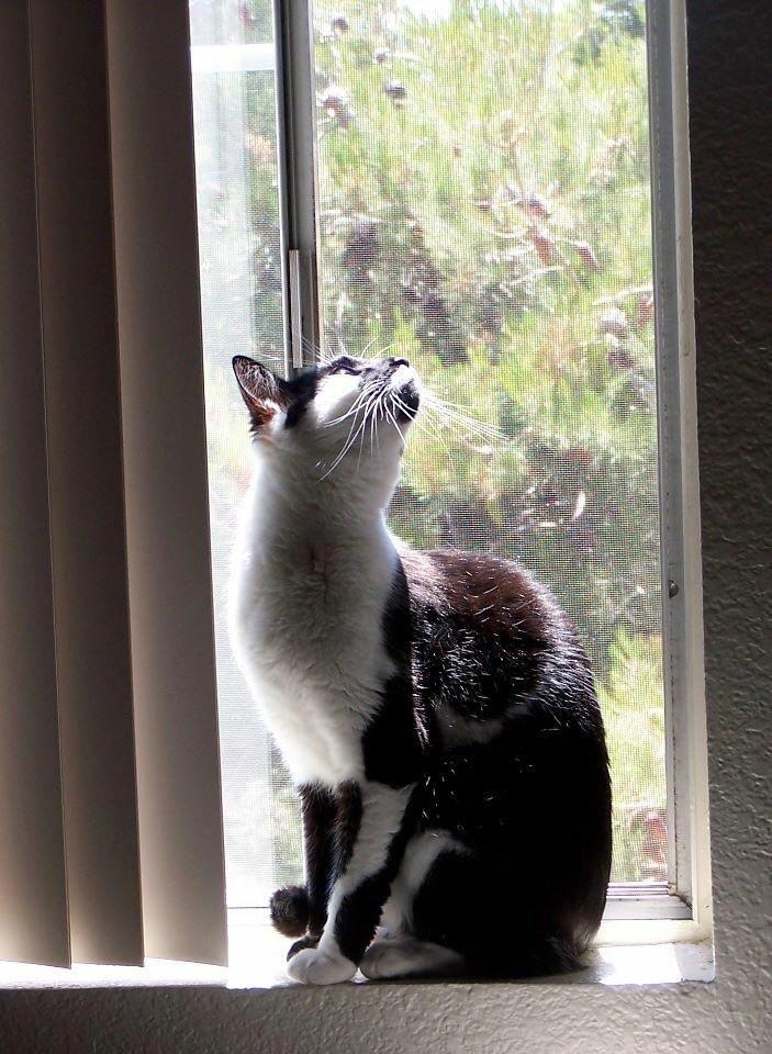 My Beautiful Giving Me A Beauty Of Photo Cats Kittens Beautifulwatchess