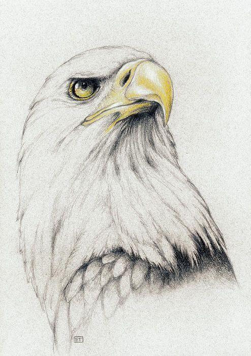 Bald Eagle Drawing: | tattoos | Pinterest | Dibujo, Ilustraciones de ...