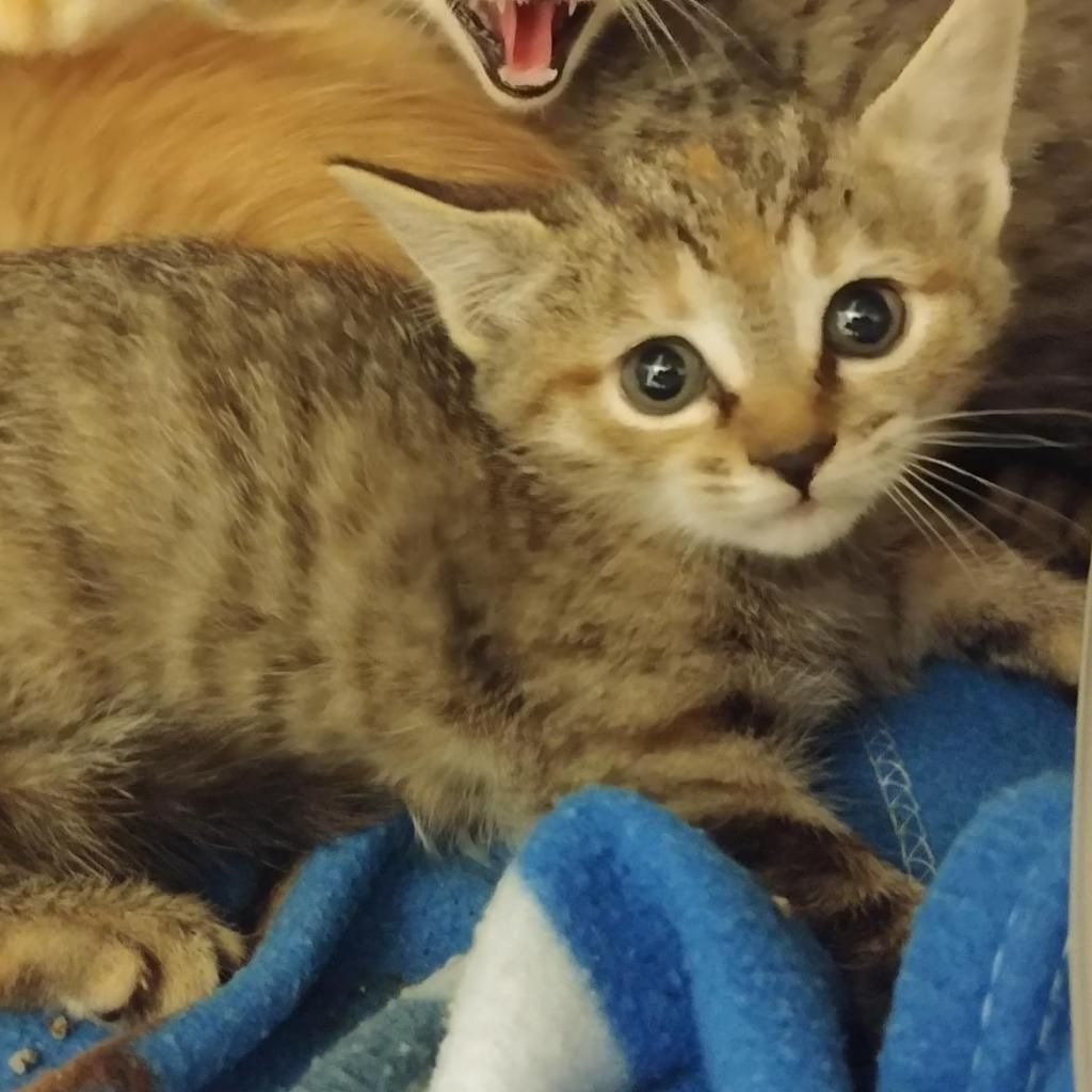 A Picture Of Fallon Cute Cats Cat Shelter Cats And Kittens