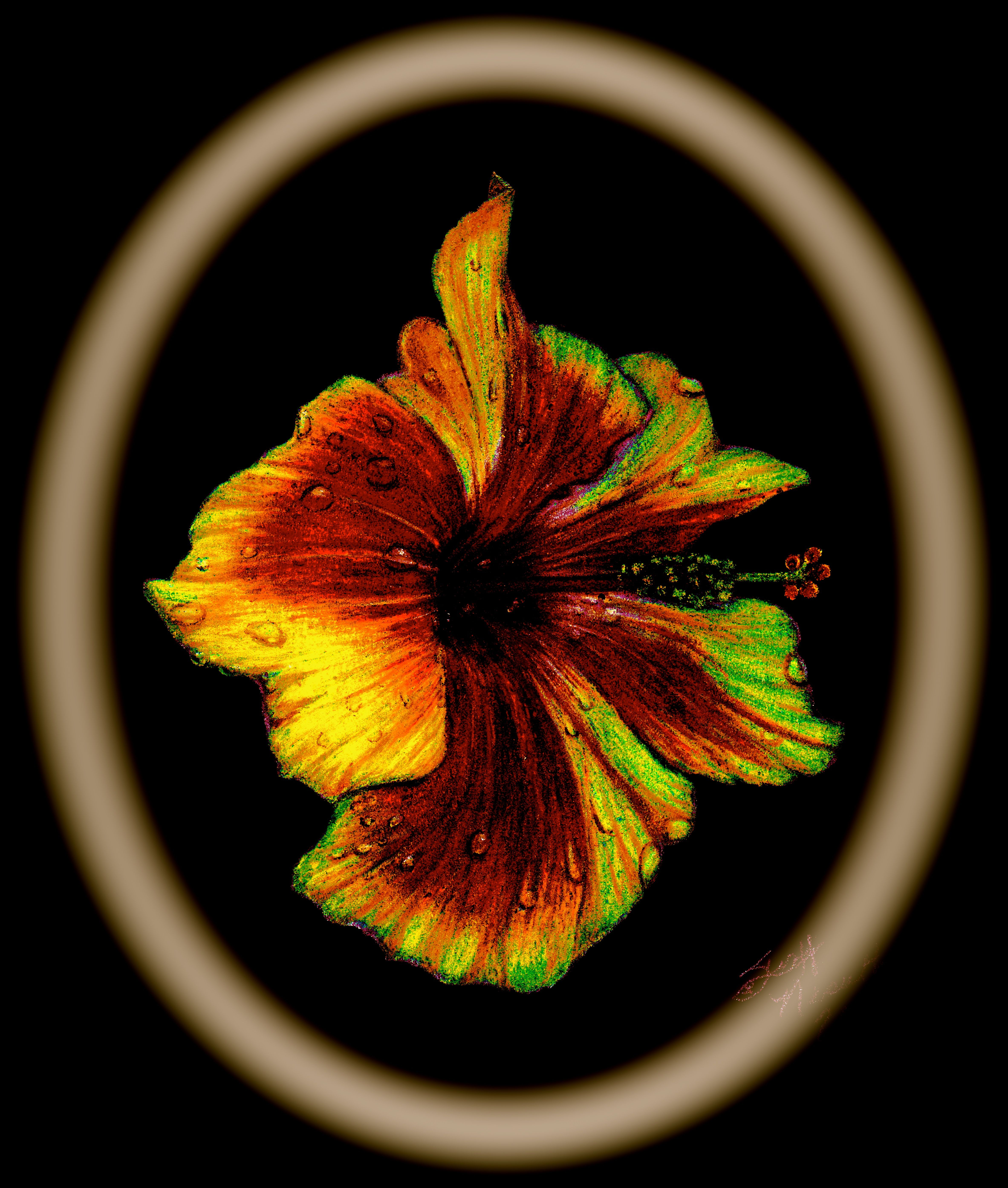 Golden Halo Hibiscus in colored pencil on black paper. #art ...