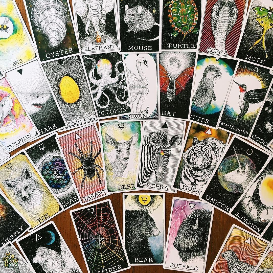 13++ Spirit animal oracle cards ideas