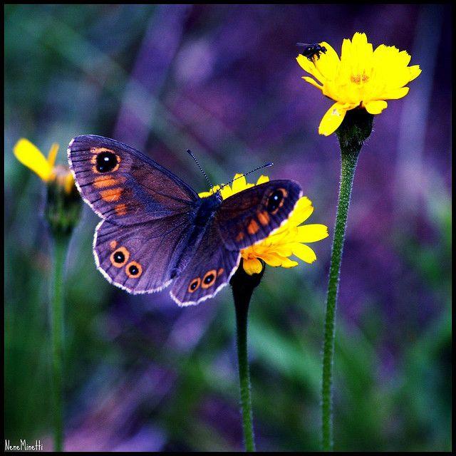 Beautiful purple butterfly   God's Critters/Butterflies 2 ...