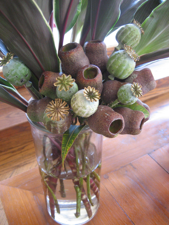 Poppy pods arrangement dried acorns floristry pinterest poppy pods arrangement dried acorns mightylinksfo Gallery