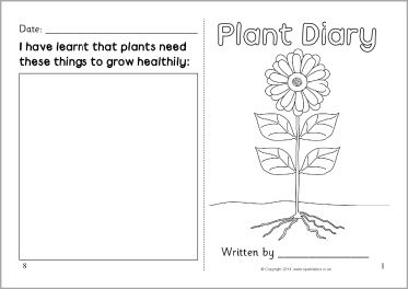 plant template