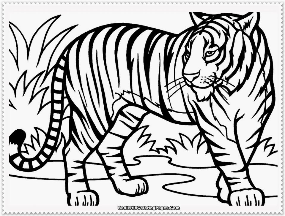 Coloring Page Of A Tiger Tiger Drawing For Kids Tiger Drawing Animal Coloring Pages