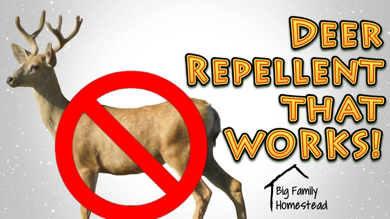 How to make deer repellent that works great youtube