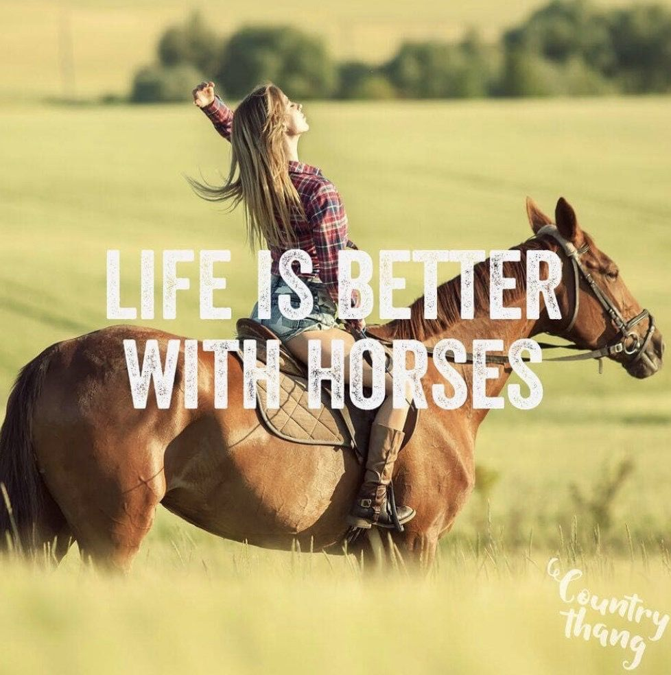 Yes Yes Yes Yesssss Yes Yes Yes Yesssss In 2021 Horse Riding Quotes Inspirational Horse Quotes Funny Horses
