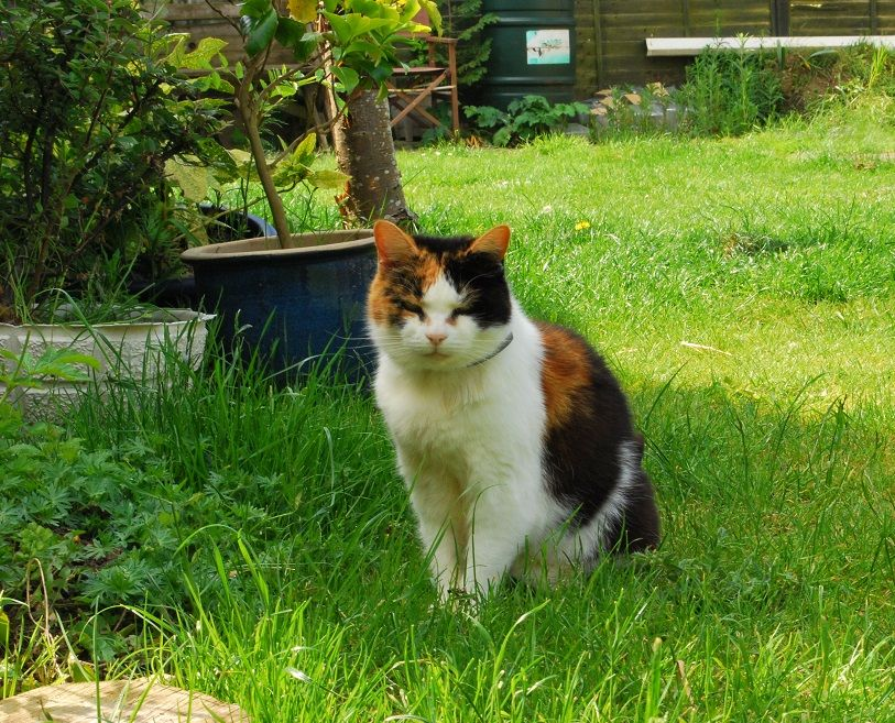 Apple cider vinegar for cats with uti amazing results