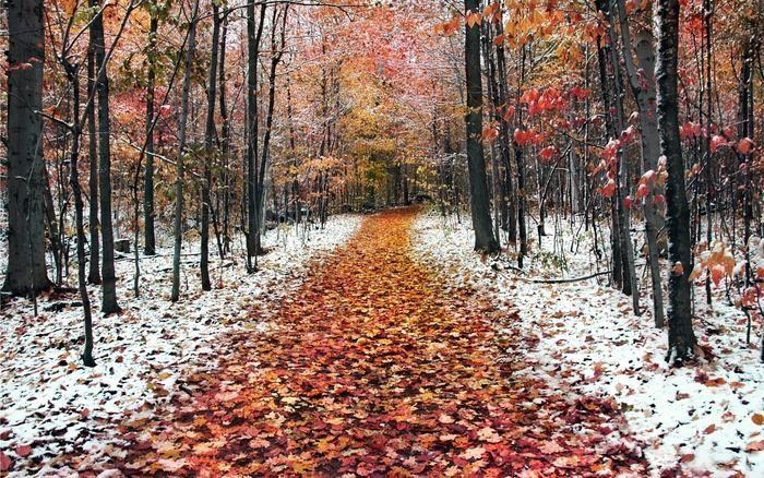 Late Fall Early Winter Wallpaper