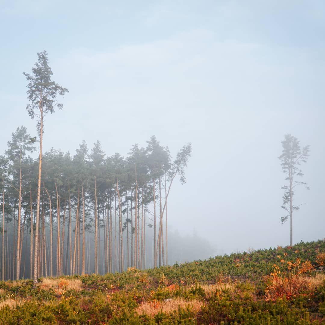 """Wiejskie Klimaty on Instagram: """"poranek. las. mgła. trochę nad mgłą nieba..🌲🌲🌲 #poranek #forest #moodygrams #jesiennie #wiejskieklimaty #foggyday #countrylife…"""""""