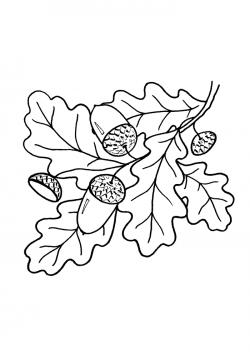 Раскраски листьев деревьев | Раскраски, Рисунки, Листья