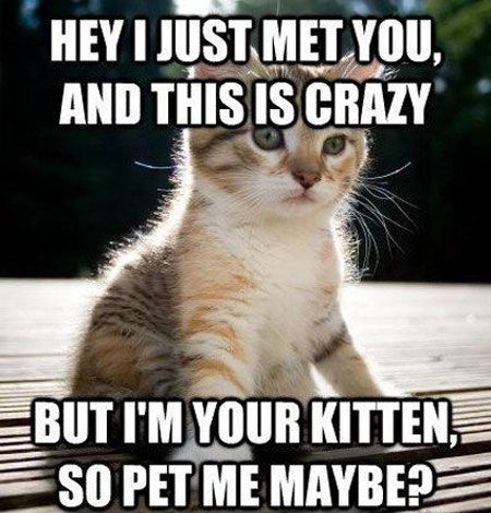 25 Funny Cat Memes That Will Make You Lol Cat Quotes Funny Kittens Funny Funny Cat Memes