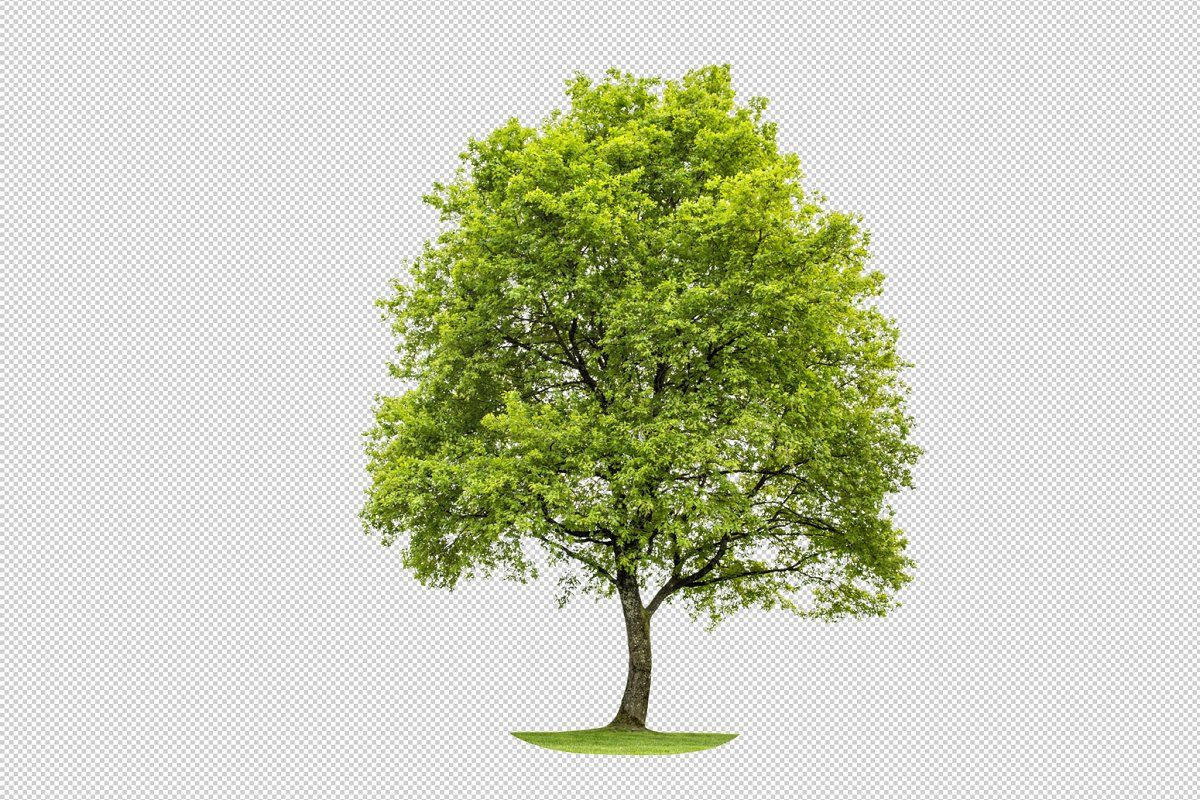 Green Oak Tree Png Transparent Green Oaks Oak Tree Tree