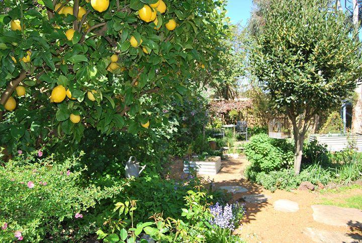 Companion Planting – Sustainable Gardening Australia • SGA ...