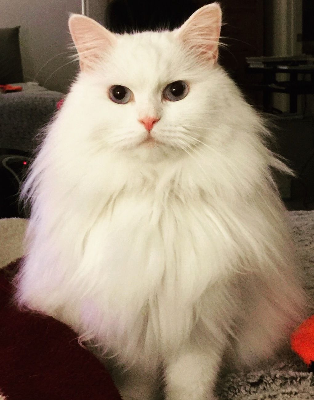 Anyone Know What Kind Of Cat This Is His Name Is River Cute Cats Hq Pictures Of Cute Cats And Kittens Free Pictures Of Funny Cats And Photo Of Cute